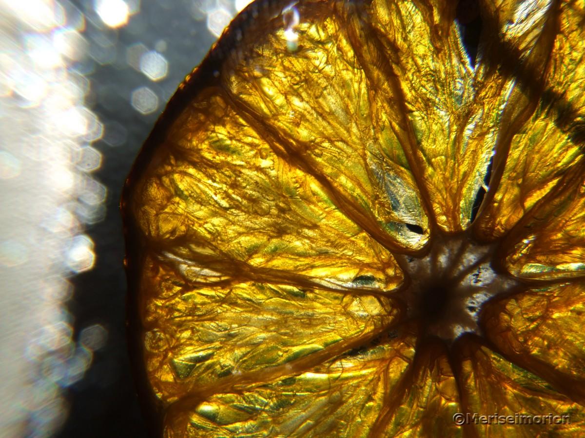 Makroaufnahme Orangenscheiben