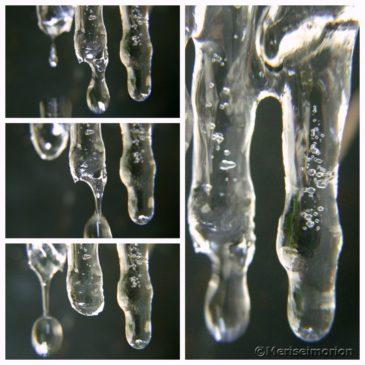 Eiszapfen und vereiste Zweige