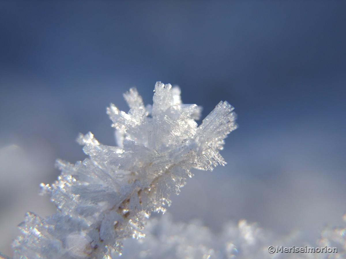 Eiskristalle im Winter