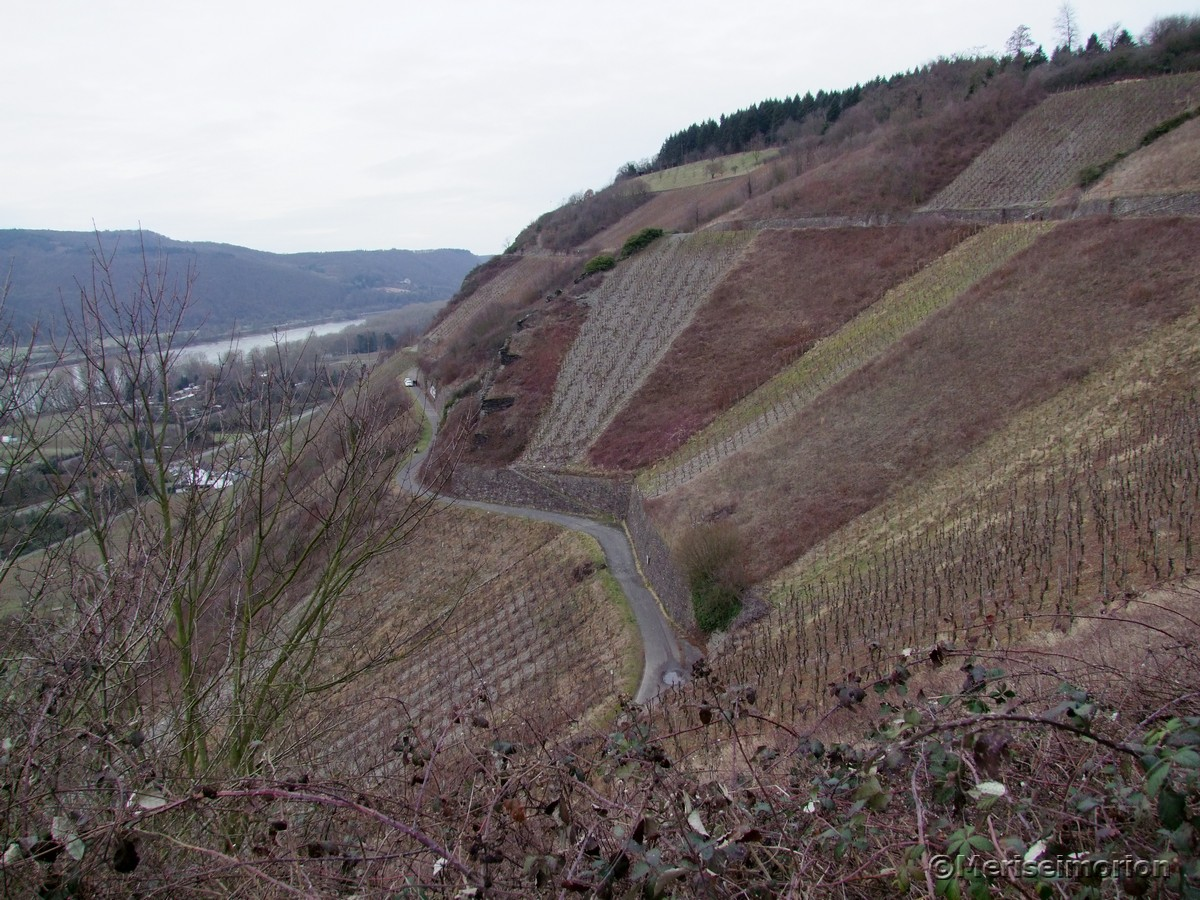 Weinberge Rheinsteig
