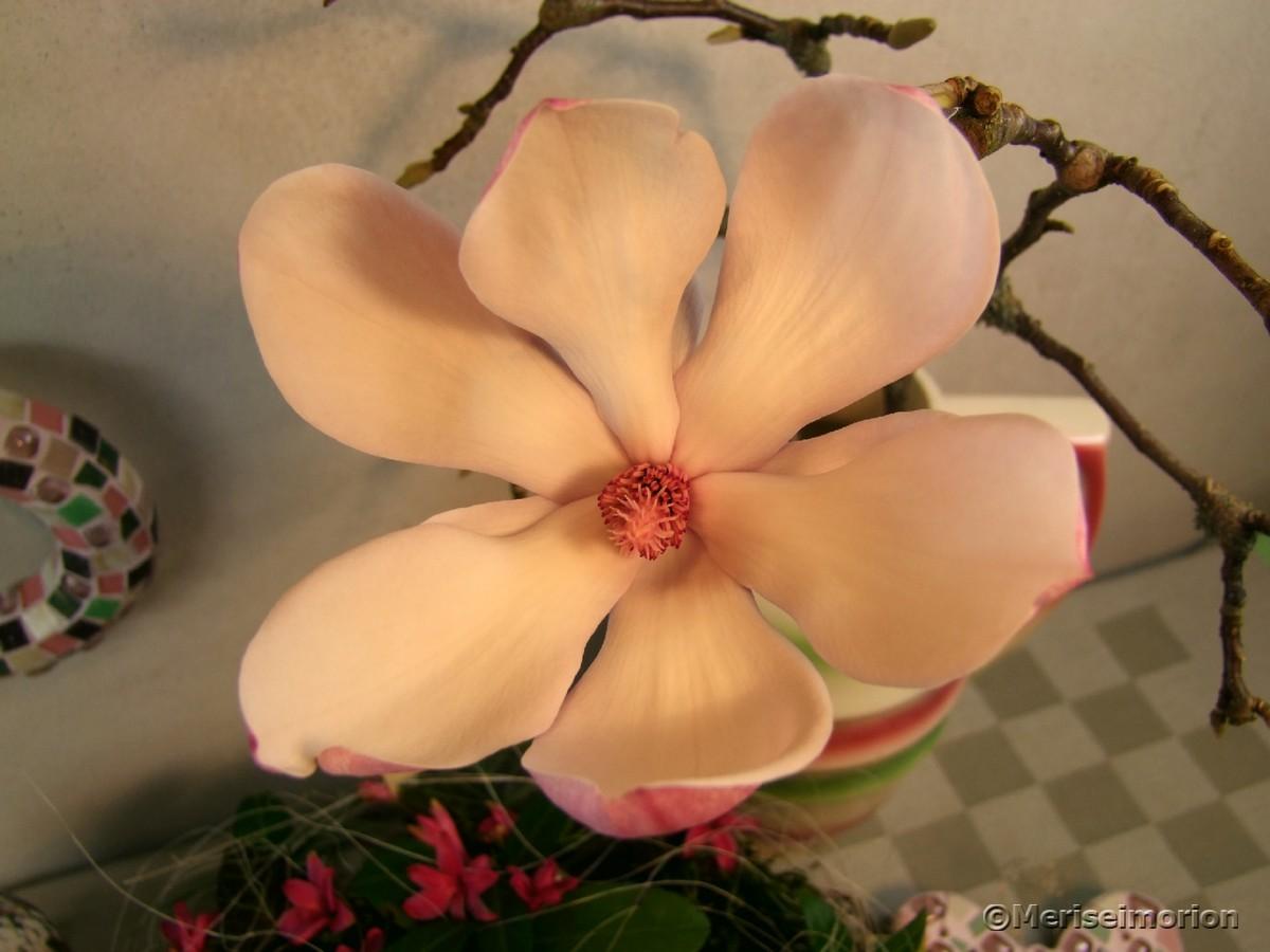 Magnolien in der Vase