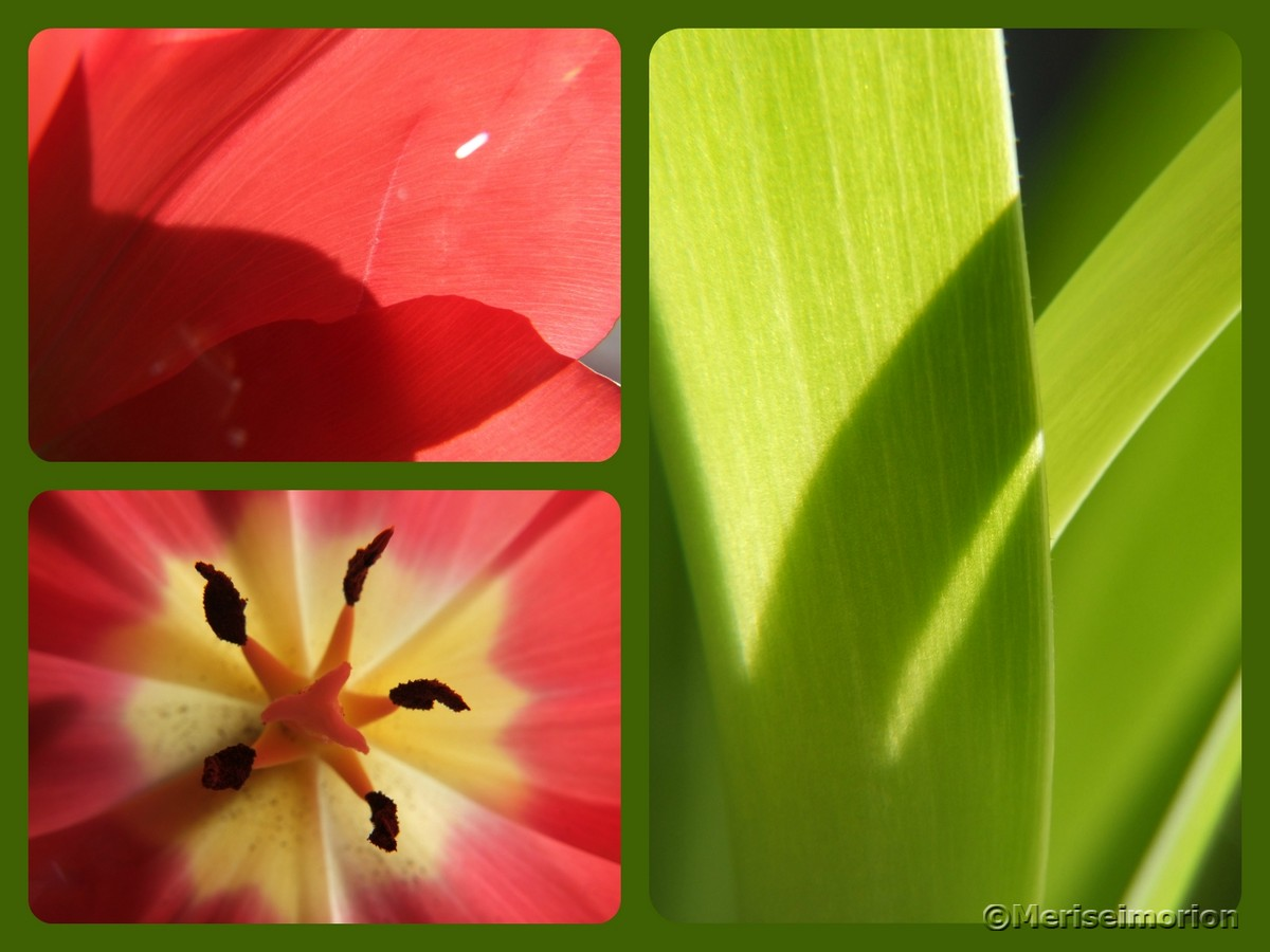 Rote Tulpen Collage