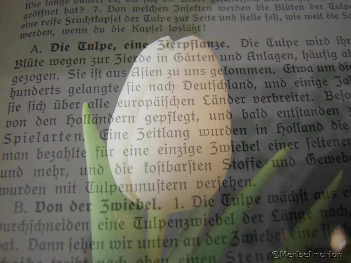 Doppelbelichtung alter Text