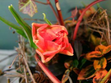 Mosaikschale mit Tulpen gefüllt