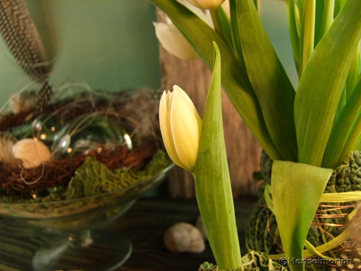 Tulpen Vase