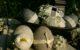 Ostern Deko schwarz weiß
