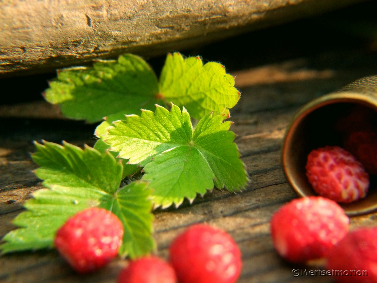 Erdbeerblätter