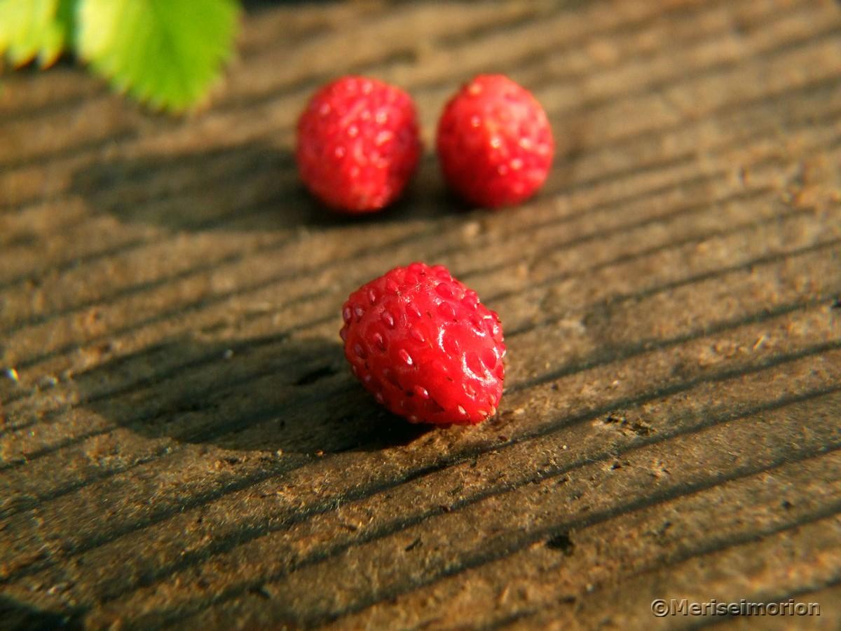 Mini Erdbeeren