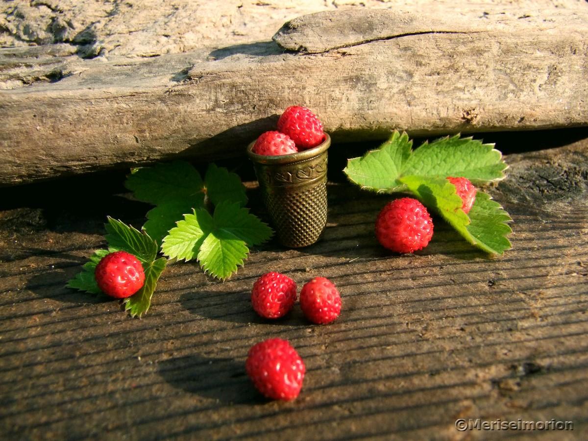 Makroaufnahmen wilde Erdbeeren