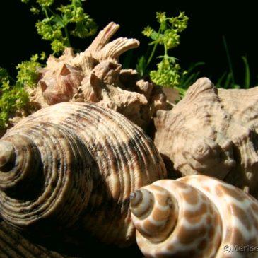 Muschel Deko aus der Nähe betrachtet