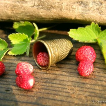 Wilde Erdbeeren im Garten
