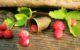 Wilde Erdbeeren