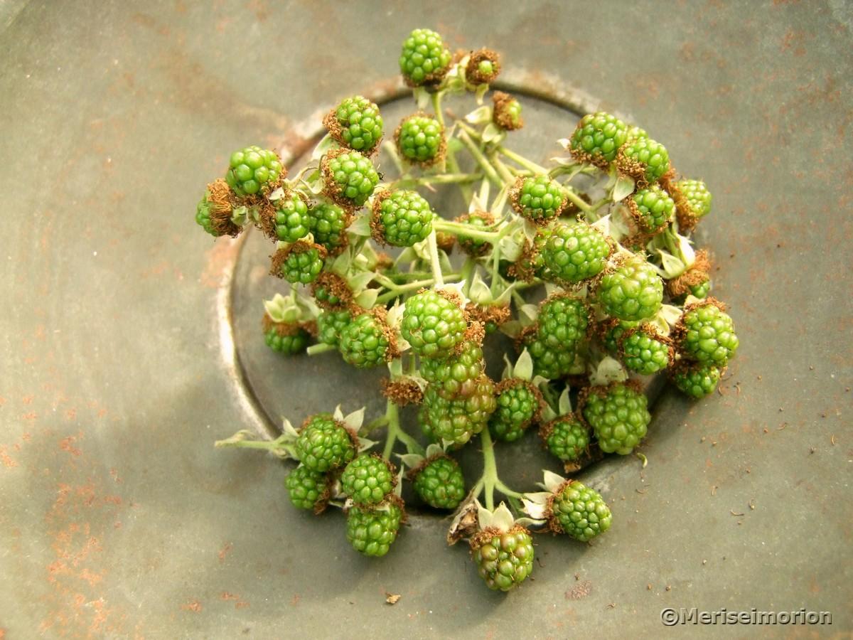 grüne Brombeeren
