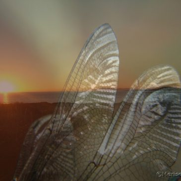 Libellenflügel und Doppelbelichtungen
