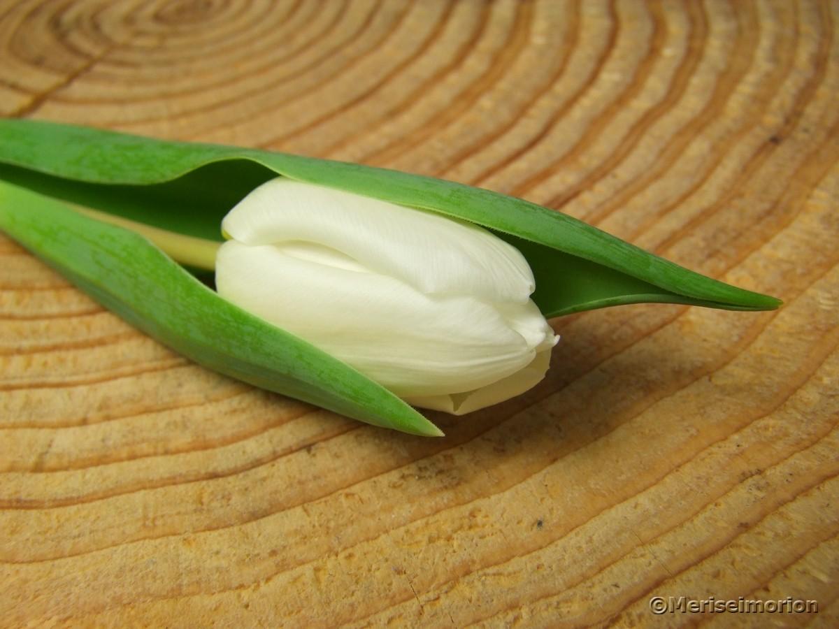 Weiße Tulpendeko