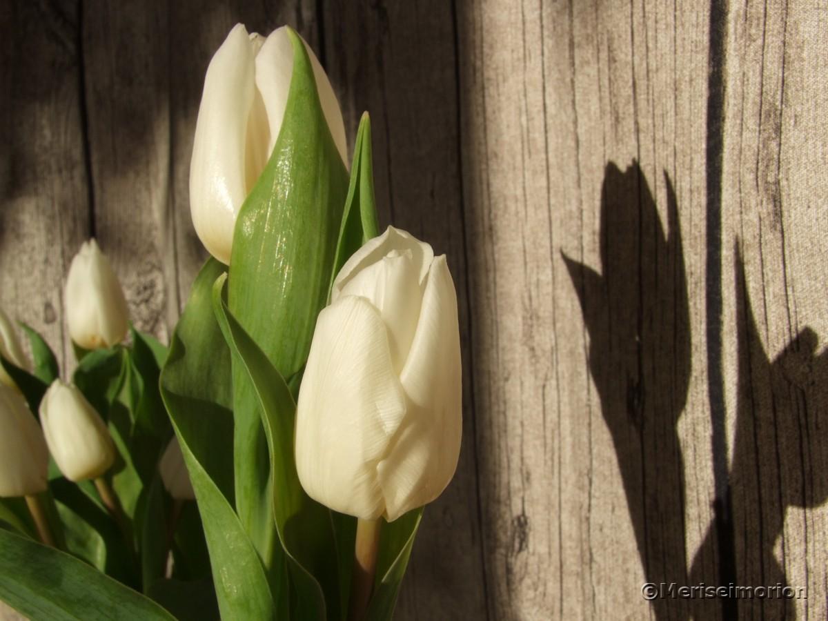 Tulpen Tischdeko