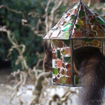 Besuch im Mosaik Vogelfutterhaus