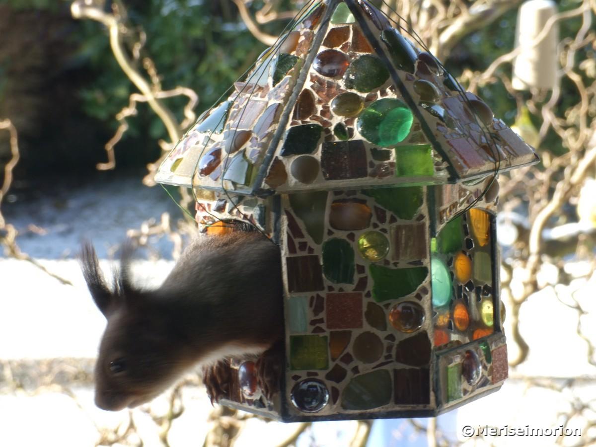 eichhörnchen-auf-futtersuche