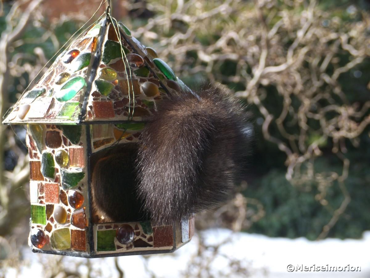 eichhörnchen-besuch-im-mosaikhaus