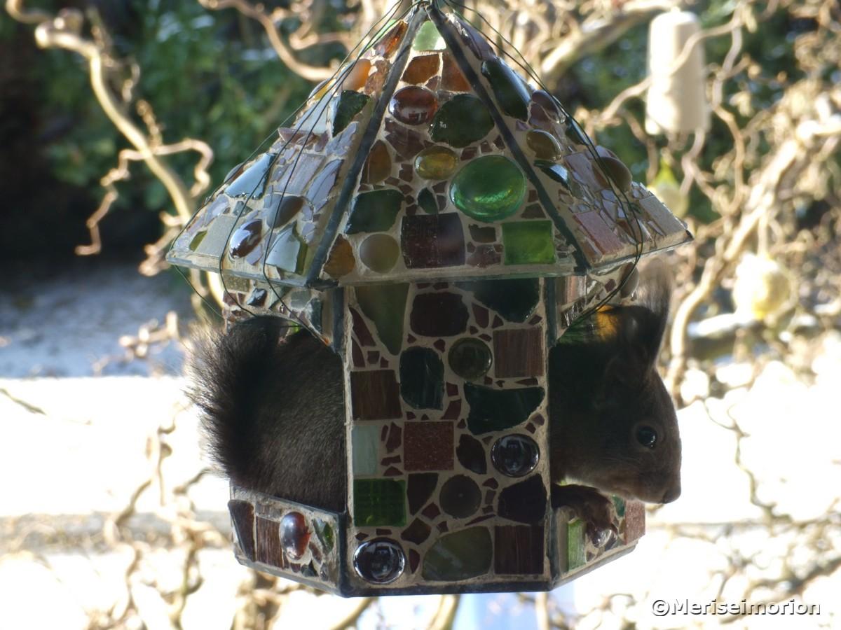 eichhörnchen-im-mosaik-vogelfutterhaus