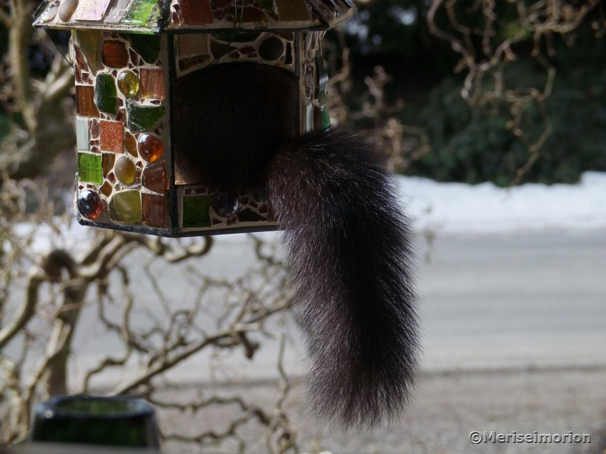 Besuch im Vogelfutterhaus | Meriseimorion