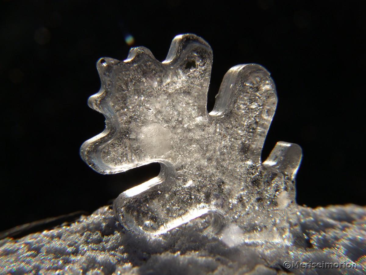 Eisblatt im Schnee