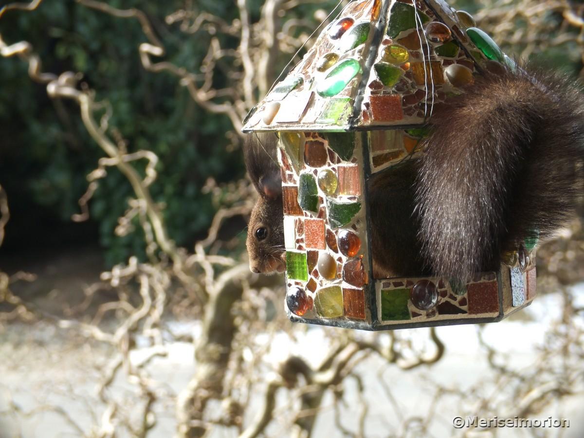 mosaik-vogelfutterhaus