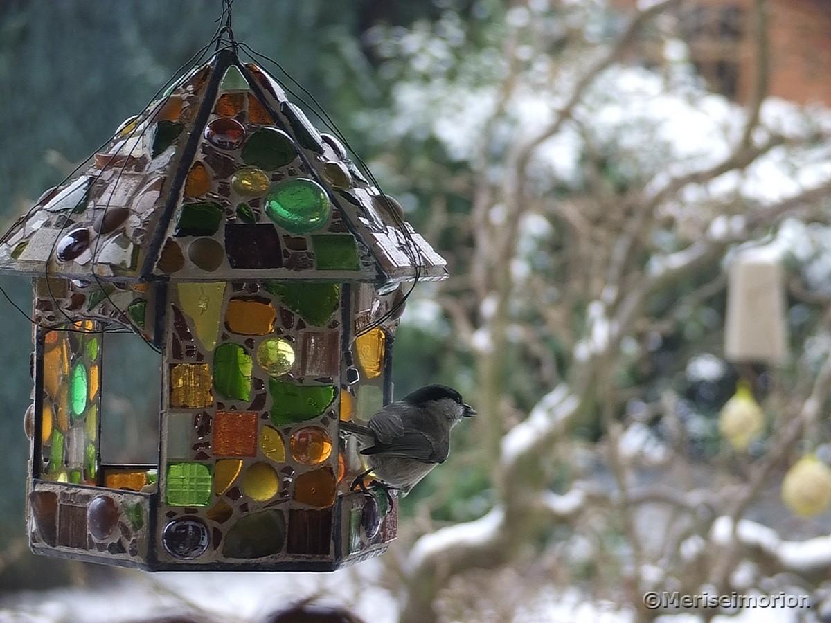 vögel-füttern-vogelhäuschen