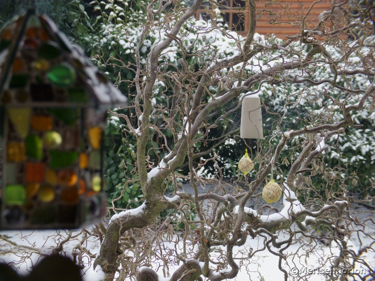 vögel-füttern-im-garten