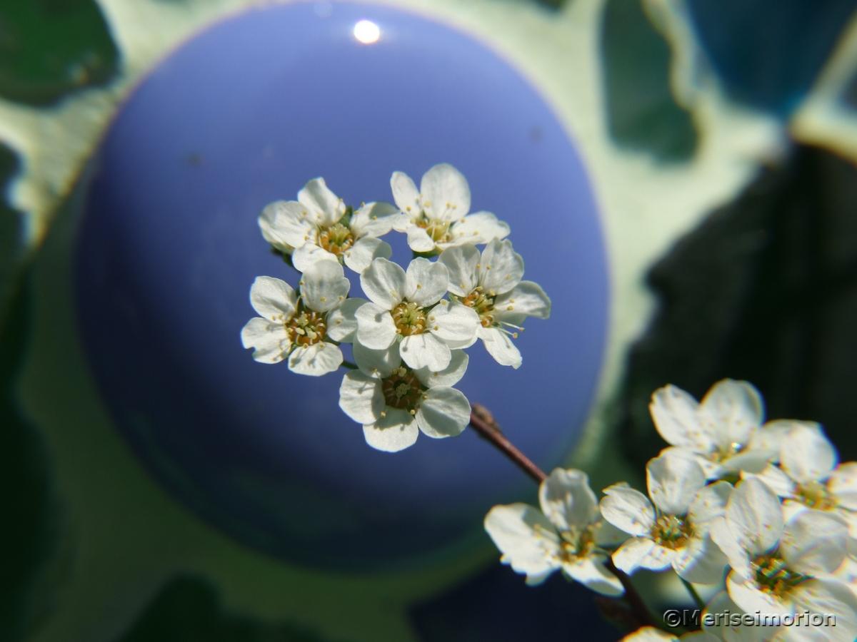 blaue Mosaiksteine