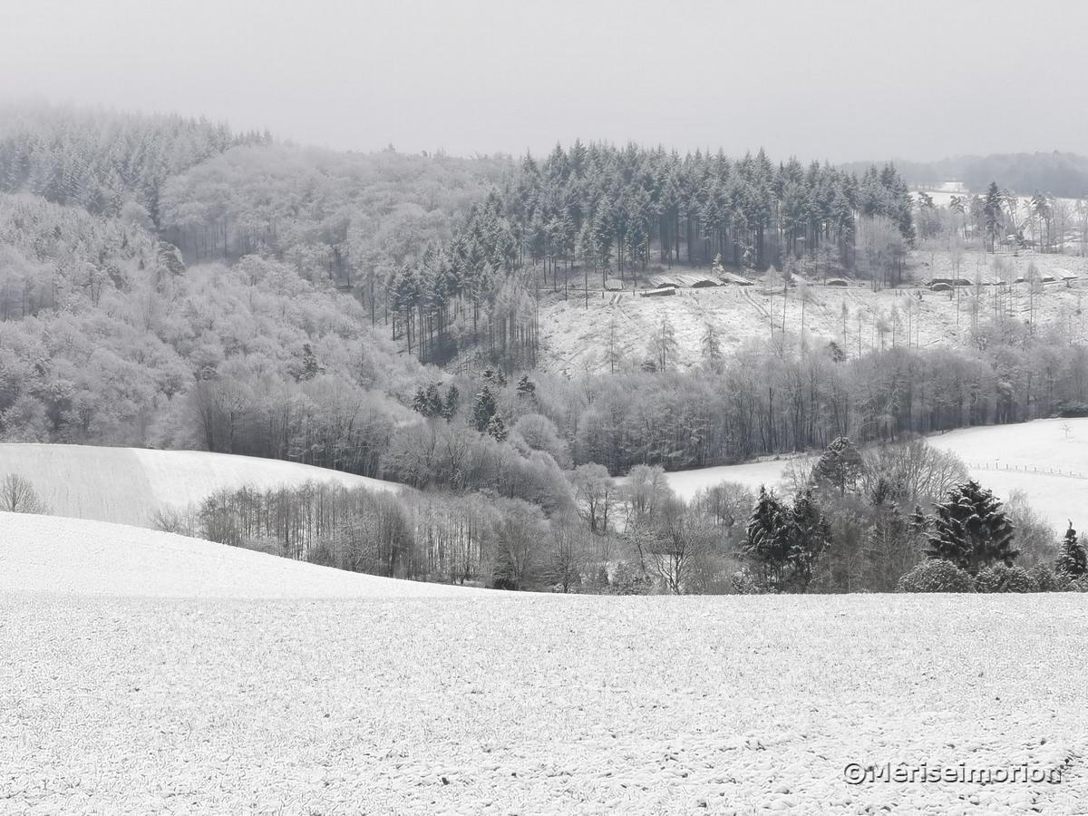 Westerwald im Januar